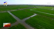 贺兰县:农业产业园引领现代农业高质量发展-20201013