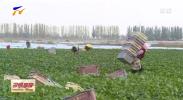 宁夏农垦加快现代农业产业发展步伐-20201116