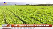 宁夏:特色产业齐头并进 农业发展成绩亮眼-20201120