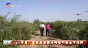 宁夏:用高质量道地枸杞叫响金字招牌-20201124