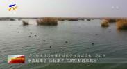 """吴忠:十万多只候鸟歇脚""""鸟岛""""-20201122"""