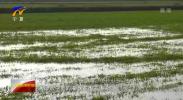 宁夏冬灌进展顺利 已完成八成灌溉任务-20201119