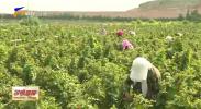 扶贫印记|月牙湖乡:南部山区移民的幸福家园-20201110