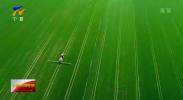 回眸十三五|宁夏农业面源污染治理工作位居沿黄九省区中上水平-20201201