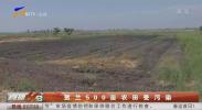 贺兰500亩农田受污染-20201231