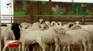 宁夏盐池滩羊品牌宣传暨特色农产品推介会走进长春-20201224