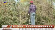 贺兰高荣村:林下经济打开循环发展增收路-20201201