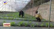 倪联新:以新品种新技术引领农户劳动致富-20201209