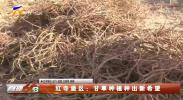 红寺堡区:甘草种植种出新希望-20201212
