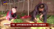 宁夏:反季节蔬菜走俏市场 助农搭上致富快车-20210113