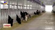 电力保障为灵武市养殖产业再添新机-20210114