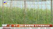 中宁:发展大棚果蔬种植 壮大村级集体经济-20210113