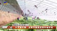 平罗姚伏镇:反季节蔬菜走俏外地市场-20210108