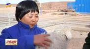 寇启芳:让滩羊更优秀 让养殖户更富有-20210118