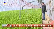 """贺兰:扩大设施农业 棚内""""春意""""盎然-20210116"""