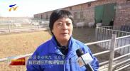 最美2020 最美劳动者  寇启芳:让滩羊更优秀 让养殖户更富有-20210117