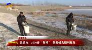"""灵武市:2000斤""""冬粮"""" 帮助候鸟顺利越冬-20210109"""