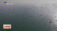 """红寺堡区发现大批赤麻鸭""""来访""""-20210123"""