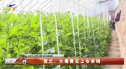 贺兰:大棚黄瓜上市俏销-20210223