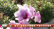 贺兰:年宵花开春意来 产业兴旺幸福来-20210211
