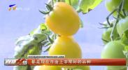 贺兰县:新品种樱桃小番茄喜获丰收-20210216