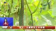 贺兰:大棚黄瓜上市俏销-20210228
