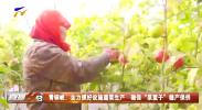 """膏铜峡:全力抓好设施蔬菜生产 确保""""菜篮子""""稳产保供-20210212"""