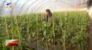 新春走基层·村里的小康|彭阳县:温棚里的新春-20210223
