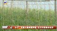 中宁:发展大棚果蔬种植 壮大村级集体经济-20210212