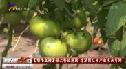 【现场直播】插上科技翅膀 连湖西红柿产业未来可期-20210304