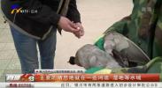绿头鸭掉落 环卫工人送到动物园救护-20210330