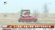 中宁县推广种植小黑麦 种养产业转型升级-20210305