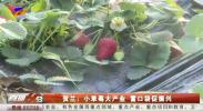 贺兰:小草莓大产业 富口袋促振兴-20210309