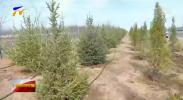 宁夏各地积极开展春季植树造林活动-20210312