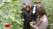 沙尘大风降温持续 宁夏农业部门采取措施积极应对-20210318