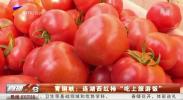 """青铜峡:连湖西红柿""""吃上旅游饭""""-20210309"""