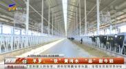 """平罗:""""饮""""黄河水""""品""""甜牛奶-20210531"""