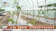 """架起""""科技协作桥"""" 闽宁两省区联手共促高质量发展-20210603"""