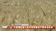 宁夏灌区春小麦示范种植亩产量再创新高-20210713