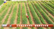 红寺堡区甜水河村:遍地黄花分外香-20210707