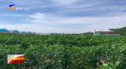九大产业看发展 | 全国知名蔬菜销售商走进固原 寻找冷凉蔬菜合作新机遇-20210716