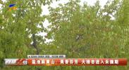 盐池麻黄山:果香芬芳 大接杏进入采摘期-20210708