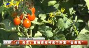 """吴忠:富硒西红柿成了致富""""金果果""""-20210728"""