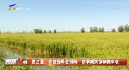 贺兰县:农技指导进田间 抗旱减灾保秋粮丰收-20210826
