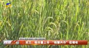 """贺兰:稻田蟹上市""""稻蟹共作""""促增收-20210831"""