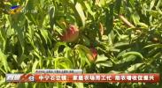 中宁石空镇:家庭农场用工忙 助农增收促振兴-20210818