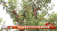 银川西夏区30万斤苹果酥梨滞销-20210831