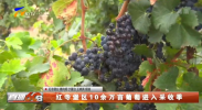 红寺堡区10余万亩葡萄进入采收季-20210928