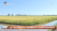 宁夏发展稻渔综合种养 实现稻香蟹肥乡村美 加快推进现代渔业高质量发展-20210913