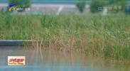 打好攻坚战 建设先行区丨宁夏计划投资8.54亿余元启动建设93个农村污水治理项目-20210906